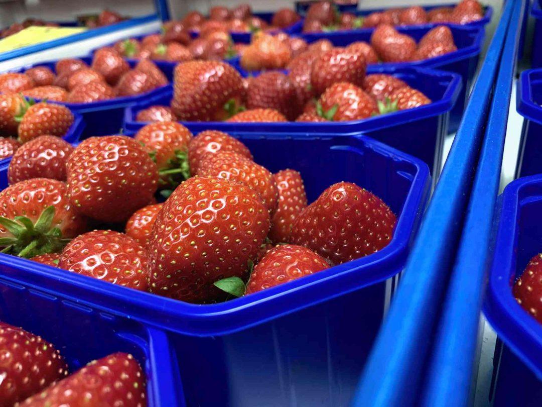 Früchteschalen tauschen