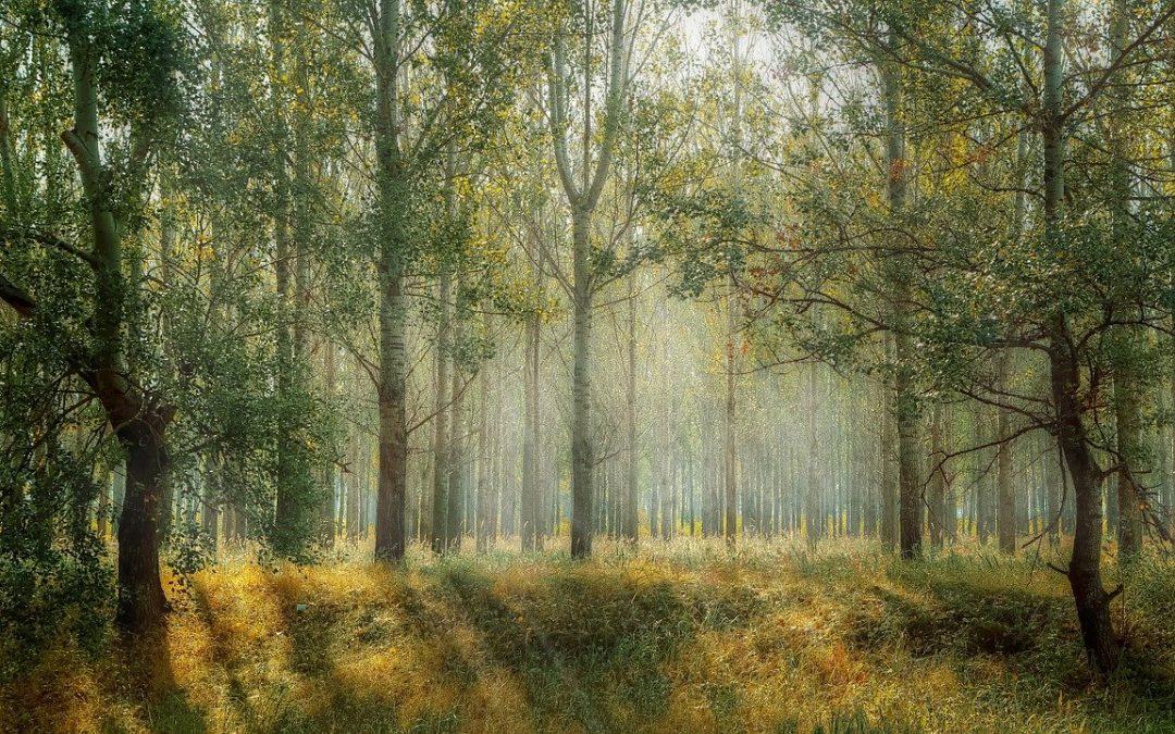 Holzverwendung nützt dem Klima